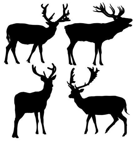alce: Cervo silhouette su sfondo bianco Vettoriali