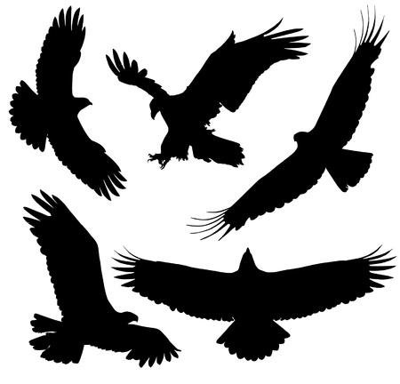 silhouette aquila: Silhouette aquila su sfondo bianco Vettoriali