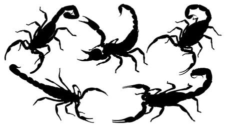 escorpio: Scorpion Silueta sobre fondo blanco