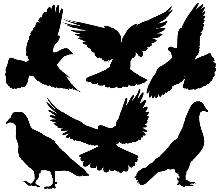 Pigeon Silhouette on white background Vector