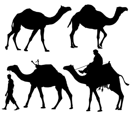 camels: Camel Silhouette on white background