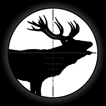 gun sight: Hunter sniper scope crosshair aiming elk