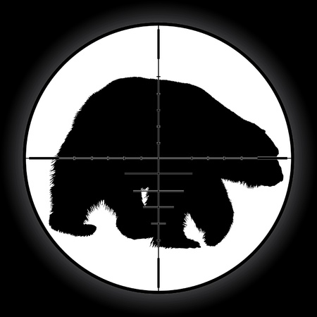 wildlife shooting: Hunter sniper scope crosshair aiming bear