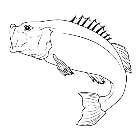 largemouth bass: Jumping Bass Fish Outline Illustration