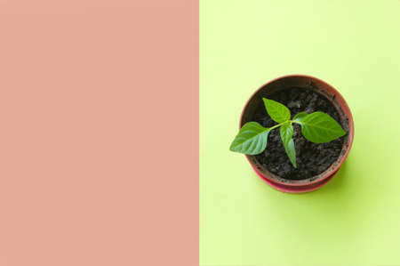 Small pot with seedling on green background, top view. Space for text.