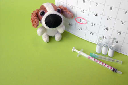 A syringe with ampoules, a soft toy a dog and a calendar with a marked date on light green background, a reminder of vaccination against rabies, the prevention of plague, infectious hepatitis, parainfluenza, coronovirus, leptospirosis, adenovirus infection for pets. The concept of the importance of vaccinating pets, grooming. Stock fotó - 154877119