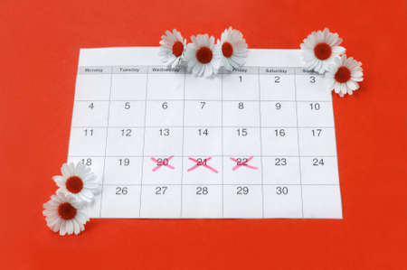 Chamomile on menstruation period calendar on red Background. The concept of female health, personal hygiene during critical days.