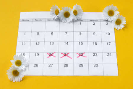 Chamomile on menstruation period calendar on yellow Background. The concept of female health, personal hygiene during critical days.