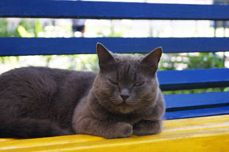 Nice gray home cat sitting at colored bench pets.