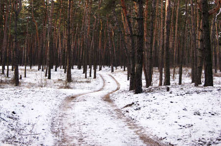 Winter road, forest with pine trees. Cold season.