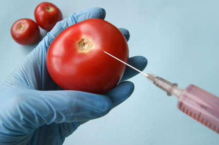 Tomato and syringe with GMO in hands on a blue background. GMO concept with vegetables and fruits. Stockfoto