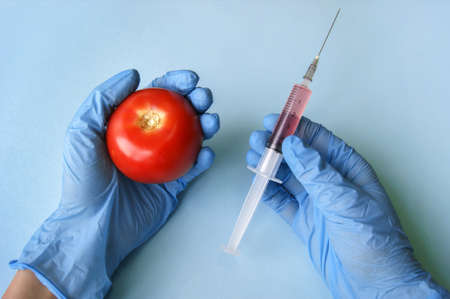 Tomato and syringe with GMO in hands on a blue background. GMO concept with vegetables and fruits.