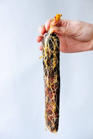 rotten overgrown carrots in the ground on a white background