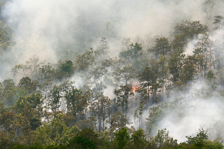 forest fire: Forest fire in tropical forest , Southeast Asia Stock Photo