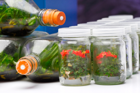 technique: Orchids sprout growing in the bottle by plant tissue culture technique Stock Photo