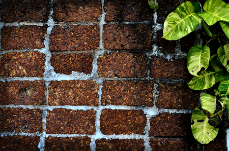 ivy wall: red brick and ivy wall