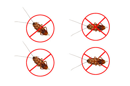 Dead cockroaches white background