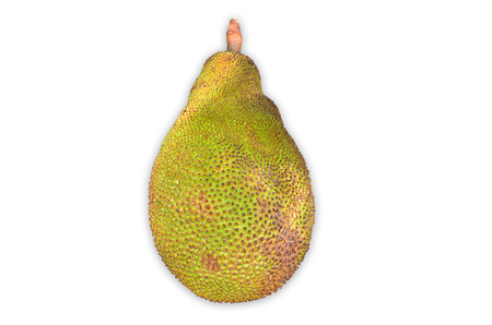 jack fruit: Green jack fruit on white background
