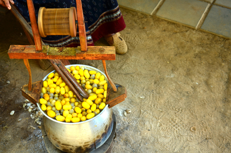 Boiling silk worm cocoon for making the silk