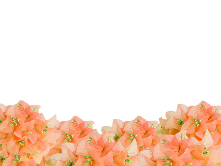 framework of old rose bouquet Bouginvillea flowers with empty space on white background and Clipping Paths for easy die cut