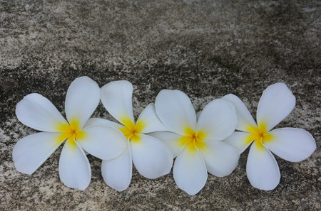Plumerias on concrete with moss background