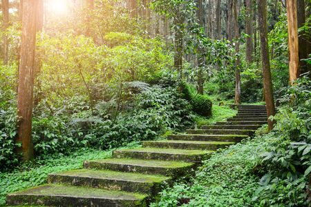 scenic forest landscape, entrance to the forest, green moss and lichen covered on curve stairway in the tropical jungle or pine forest with sunlight background Stok Fotoğraf