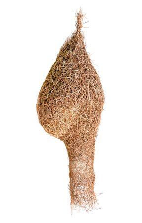 empty weaver bird nest isolated on white