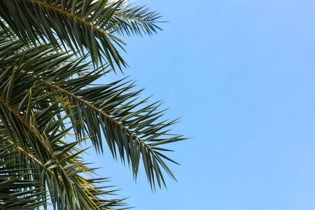 green palm leave on blue sky background, copy space