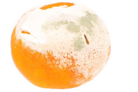 Stinky Rotten Fungus Mold Orange Isolated on white background photo