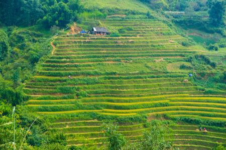 The landscape of Saigon: Đẹp nhìn ra núi chứa rất nhiều ruộng bậc thang