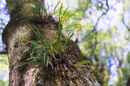 abundant: many green parasitic on tree trunk look abundant natural Stock Photo