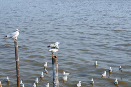 immigrate: Emigrate seagull stand on bamboo