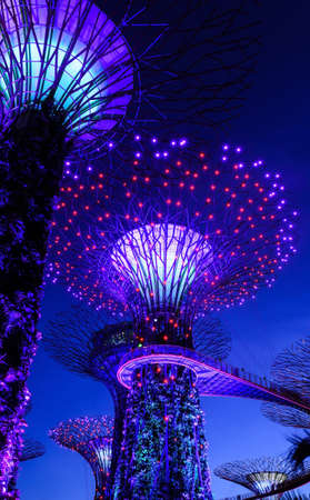 SINGAPORE - JANUARY 31: Night view at Garden by the Bay super\ tree groove January 31, 2014 in Singapore. Spanning 101 hectares of\ reclaimed land in central Singapore, adjacent to Marina Reservoir.\