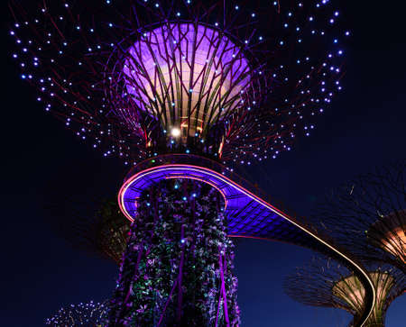 SINGAPORE - JANUARY 31: Night view at Garden by the Bay super tree groove January 31, 2014 in Singapore. Spanning 101 hectares of reclaimed land in central Singapore, adjacent to Marina Reservoir.