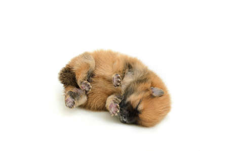 young puppy sleeping in action Banco de Imagens