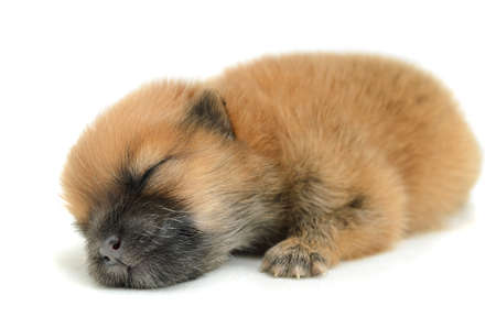 birth puppy sleeping
