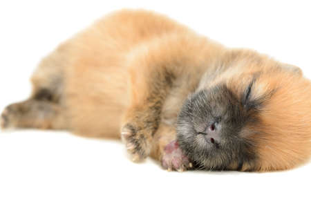 young puppy sleep on white background Banco de Imagens