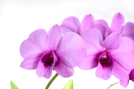 water drop on petal orchid background
