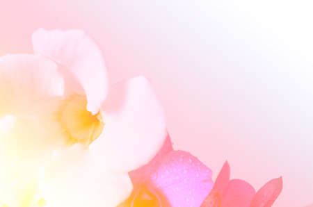 Colorful soft blur flower background