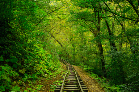 the abandoned railway moves away into the green autumn forest. Foto de archivo