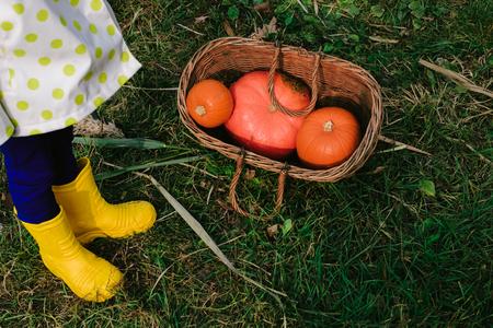 children's feet in yellow rubber boots near orange pumpkins in a wooden wicker basket. autumn harvest.Halloween