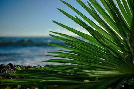 green palm leaf close up on background of the sea in the afternoon
