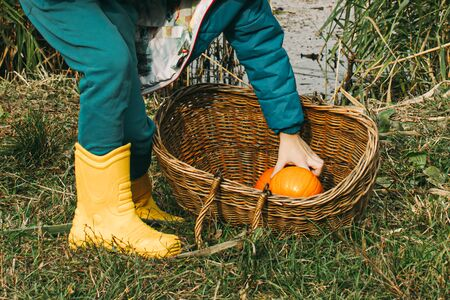 small childrens hands carry an orange pumpkin in a wooden wicker basket. yellow boots autumn leaves river.
