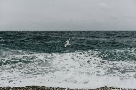 stormy sea cloudy sky waves rocky shore seagulls 版權商用圖片