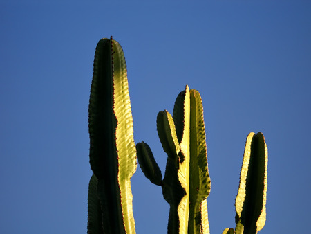 green cactus against clear blue sky