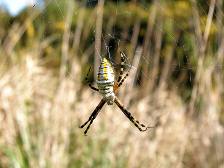 Close up shot of yellow spider on its web Imagens