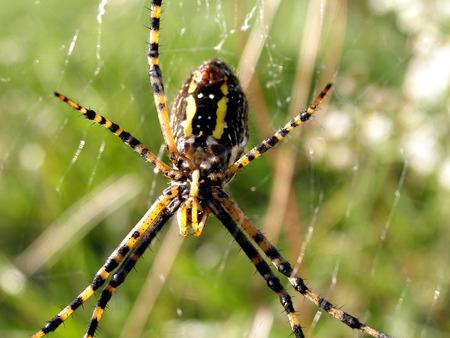 close up shot of yellow spiders underside