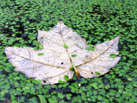 close up shot of leaves floating on water