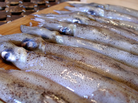 close up shot of row of squid on chopping board Reklamní fotografie