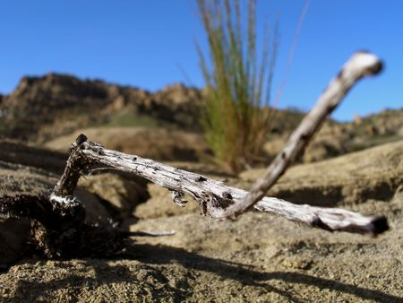 dried twig against rock